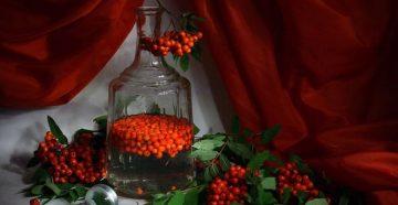 Рецепты вина из красной рябины