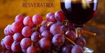 Красное вино повышает иммунитет