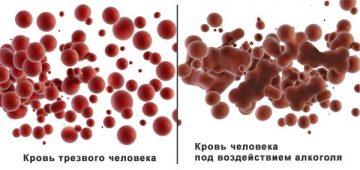 Сколько держится алкоголь от пива в крови?